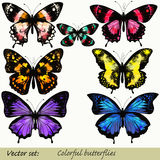 Sistema de las mariposas realistas del vector para el diseño Imagen de archivo libre de regalías