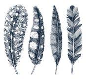 Sistema de las plumas realistas rústicas de diversos pájaros, búhos, pavos reales, patos mano grabada dibujada en viejo bosquejo  Fotografía de archivo