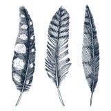 Sistema de las plumas realistas rústicas de diversos pájaros, búhos, pavos reales, patos mano grabada dibujada en viejo bosquejo  Fotos de archivo libres de regalías