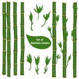 Sistema de las ramas de bambú Fotografía de archivo libre de regalías