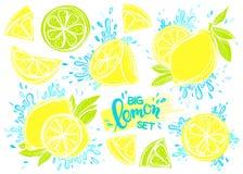 Sistema de limones dibujados mano estilizada Fotografía de archivo libre de regalías