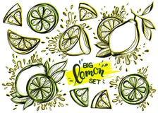 Sistema de limones dibujados mano estilizada de la tinta Imagen de archivo