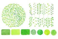 Sistema de logotipos de la acuarela Hojas del verde, ramas, plantas Imagenes de archivo