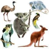 Sistema de los animales Australia Ejemplo de la acuarela en el fondo blanco Imágenes de archivo libres de regalías
