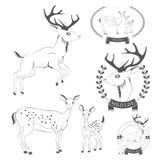 Sistema de los ciervos del vintage, emblemas, etiquetas, logotipo Fotos de archivo