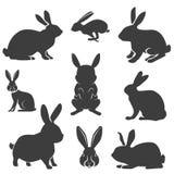 Sistema de los conejos en diversas actitudes Conejos de Pascua