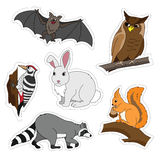 Sistema de los diversos animales lindos, animales del bosque Pulsación de corriente en una rama, búho, palo, conejito, ardilla, m Imagen de archivo libre de regalías