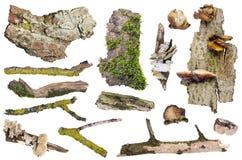 Sistema de elementos aislados del bosque Fotos de archivo