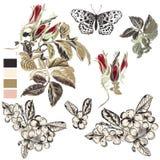 Sistema de los elementos florales dibujados mano del vector para el diseño Imagenes de archivo