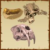 Sistema de los esqueletos fósiles, tres diversos animales Fotos de archivo