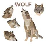 Sistema de los lobos de gris ilustración del vector