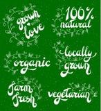 Sistema de los logotipos, sellos, insignias, etiquetas para natural, productos del eco, granjas, orgánicas Fotografía de archivo libre de regalías