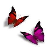 Sistema de mariposas rojas y rosadas hermosas del vuelo con la sombra suave Imagen de archivo