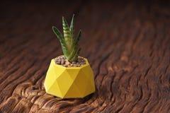 Sistema de motivación del inconformista con suculento en pintado en plantador concreto del color amarillo Orientación horizontal fotografía de archivo