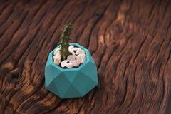 Sistema de motivación del inconformista con suculento en pintado en plantador concreto del color azul Orientación horizontal foto de archivo