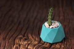 Sistema de motivación del inconformista con suculento en pintado en plantador concreto del color azul Orientación horizontal imágenes de archivo libres de regalías