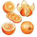 Sistema de naranjas de la acuarela Foto de archivo
