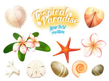 Sistema de objetos tropicales de la naturaleza: las cáscaras del mar, plumeria florecen el dólar de arena del frangipani, estrell