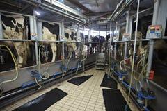 Sistema de ordeño automático de la leche de la agricultura de la granja de la vaca Foto de archivo libre de regalías