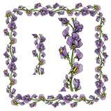 Sistema de ornamentos - frontera y marco florales dibujados mano decorativa Imagen de archivo
