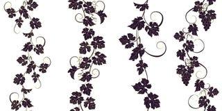 Sistema de ornamentos inconsútiles con las vides de uvas Imagen de archivo libre de regalías
