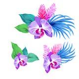 Sistema de orquídeas del vector Aislado Foto de archivo