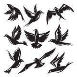 Sistema de pájaros Imagen de archivo libre de regalías