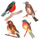 Sistema de pájaros aislados watercolor stock de ilustración