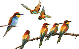 Sistema de pájaros coloreados en diversas actitudes aislados en blanco Foto de archivo