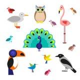 Sistema de pájaros de la historieta en un estilo plano en el fondo blanco Vector la ilustración, EPS10 Foto de archivo libre de regalías