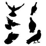 sistema 6 de pájaros de la silueta que vuelan el icono Fotos de archivo libres de regalías