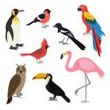 Sistema de pájaros lindos de la historieta en el fondo blanco Foto de archivo libre de regalías