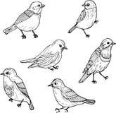 Sistema de pájaros lineares del dibujo Foto de archivo libre de regalías