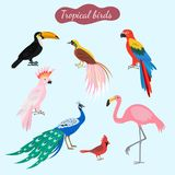 Sistema de pájaros tropicales en fondo azul libre illustration