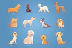 Sistema de perros ingleses Foto de archivo libre de regalías