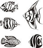 Sistema de pescados tropicales blancos y negros Foto de archivo