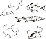 Sistema de pescados tropicales blancos y negros Fotos de archivo