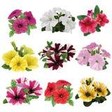 Sistema de petunias multicoloras Imagen de archivo libre de regalías