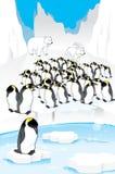 Sistema de pingüinos divertidos Imagen de archivo libre de regalías