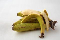 Sistema de plátanos Imágenes de archivo libres de regalías