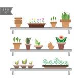 Sistema de plantas de la casa en potes en los estantes Fotos de archivo libres de regalías