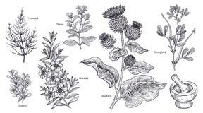 Sistema de plantas, de flores y de hierbas imedical Fotografía de archivo