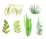 Sistema de plantas verdes ilustración del vector