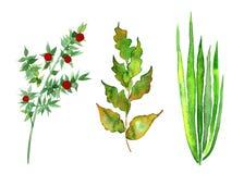 Sistema de plantas verdes Imagen de archivo