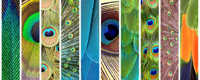 Sistema de plumas coloridas Fotografía de archivo
