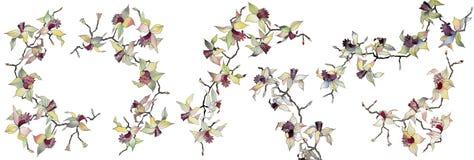 Sistema de ramas aisladas de la orquídea Foto de archivo