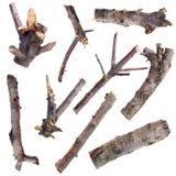 Sistema de ramas de árbol secas aisladas en un fondo blanco Fotos de archivo