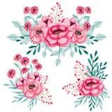 Sistema de ramos de la acuarela con las rosas y las hojas rosadas Foto de archivo libre de regalías