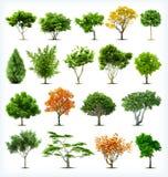 Sistema de árboles aislados. Vector Imágenes de archivo libres de regalías