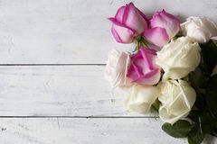 Sistema de rosas con los pétalos blancos y púrpuras en el fondo de madera blanco Imagenes de archivo